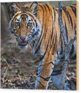 Bengal Tiger Panthera Tigris Tigris Wood Print