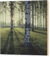 Birch Trees By The Vuoksi River Wood Print