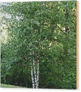 3 Birch Trees On A Hill Wood Print