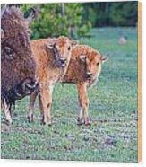 Bison Babies Wood Print