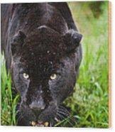 Black Jaguar  Wood Print