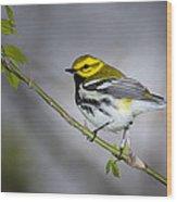 Black Throated Green Warbler Wood Print