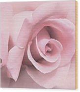 Blushing Pink Rose Flower Wood Print