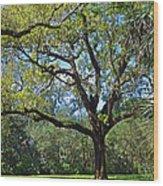 Bok Tower Gardens Oak Tree Wood Print