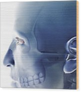 Bones Of The Face Wood Print