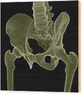 Bones Of The Pelvis Wood Print