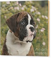 Boxer Puppy Wood Print