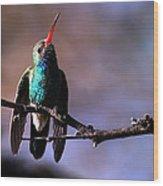 Broad Bill Hummingbird Wood Print