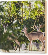 3 Bucks Caught In A Orchard Wood Print