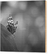 Butterfly Black And White Wood Print