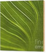 Calla Lily Stem Close Up Wood Print