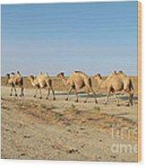Camel. Wood Print