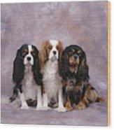 Cavalier King Charles Spaniels Wood Print