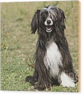 Chinese Crested Dog Wood Print