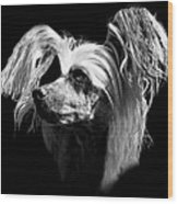 Chinese Crested Hairless Wood Print