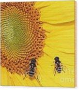 Chipmunk's Peredovik Sunflower Wood Print