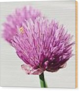 Chives Wood Print