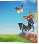 Colorful Buttefly Spring Field Wood Print