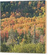 Colorful Fall Forest Near Rangeley Maine Wood Print