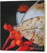 Colorful Portrait Of A Butterfly  Wood Print