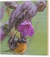 Common Carder Bee Wood Print