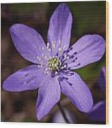 Common Hepatica Wood Print