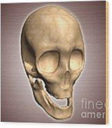 Conceptual Image Of Human Skull Wood Print by Stocktrek Images