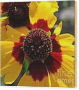 Coreopsis Or Golden Tickseed Wood Print