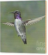 Costas Hummingbird Wood Print