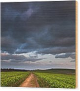 Countryside Landscape Path Leading Through Fields Towards Dramat Wood Print by Matthew Gibson