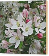 Crabapple Blossoms Wood Print