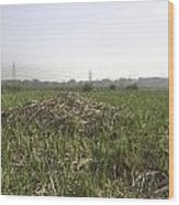 Cut And Dried Grass Along With Growing Grass Wood Print