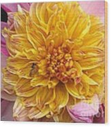 Dahlia Named Lambada Wood Print