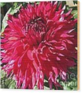Dahlia Named Mingus Erik Wood Print
