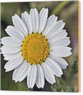Daisy Flower Wood Print by George Atsametakis