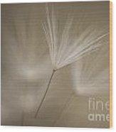 Dandelion Close-up View Backlit Wood Print
