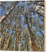 Dandenong Forest Wood Print