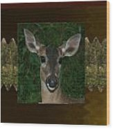 Deer Wild Animal Portrait For Wild Life Fan From Navinjoshi Costa Rica Collection Wood Print