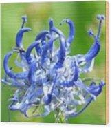 Devils Claw Flower Wood Print