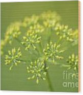 Yellow Dill Flower Wood Print