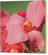 Dwarf Canna Lily Named Shining Pink Wood Print