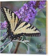 Eastern Tiger Swallowtail Butterfly On Butterfly Bush Wood Print