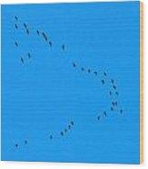 Eurasian Cranes Wood Print