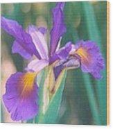 Exotic Iris Wood Print