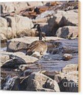 Falls Park Waterfalls Wood Print