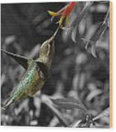 Female Anna's Hummingbird Wood Print