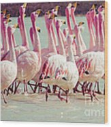 Flamingos On Lake In Andes Wood Print