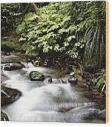 Forest Stream  Wood Print