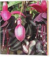 Fuchsia Named Roesse Blacky Wood Print