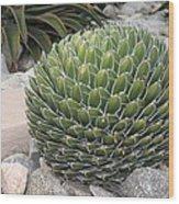 Garden Cactus Wood Print